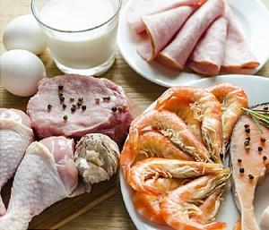 carnivore - protein